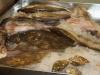 fiskekluben-rens-078_0