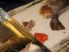 fiskekluben-rens-088