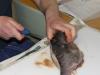fiskekluben-rens-091